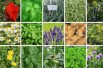 تولید چهار هزار و ۵۰۰ تن فرآورده های گیاهی در کردستان