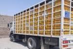 کشف ۱۰۰۰ قطعه مرغ زنده بدون مجوز حمل در آستانه اشرفیه