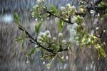بارش باران در هرمزگان آغاز شد/پیش بینی طغیان رودخانه ها و سیل