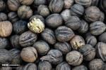 مهارت پخت کوکوی گردوی تویسرکان ثبت ملی شد