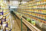 توانمندی فارس در استقلال تولید روغن خوراکی در کشور