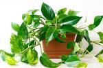 ۲۴ گیاه آپارتمانی مقاوم که نگهداری از آنها آسان است   ۲۹ فروردین ۱۲:۰۱   ۲۹ فروردین ۱۲:۰۱