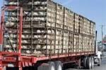 کامیونهای حامل مرغ زنده قاچاق در قزوین به مقصد نرسیدند