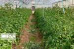 فعالان حوزه مهندسی کشاورزی در قم نسبت به اخذ مجوز اقدام کنند