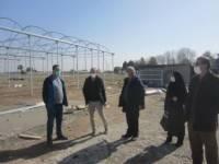 بازدید مدیر جهاد کشاورزی شهرستان رباط کریم از گلخانه های درحال احداث