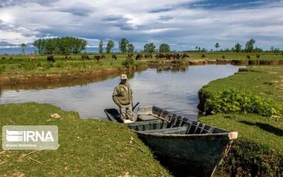 Over 2.5 billion tomans for Anzali Lagoon revival program